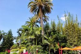 Пальмы в Орландо